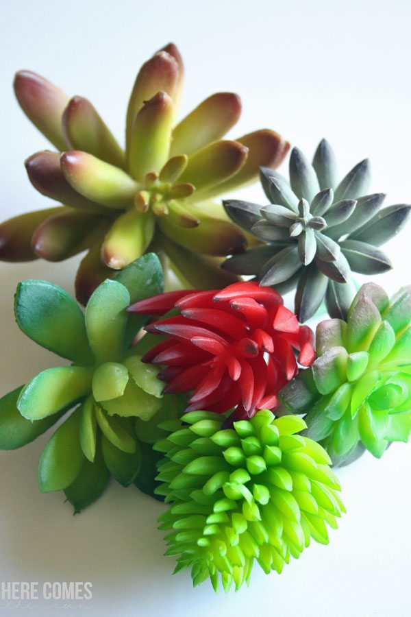 Create a gorgeous succulent wreath with this easy tutorial!